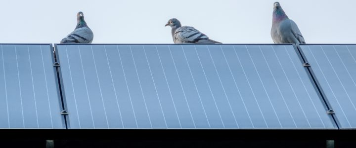 How much does it cost to pigeon proof solar panels?